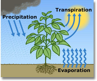 Datei:Cycle-evapotranspiration.jpg