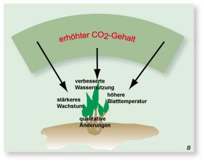 folgen des ozonlochs
