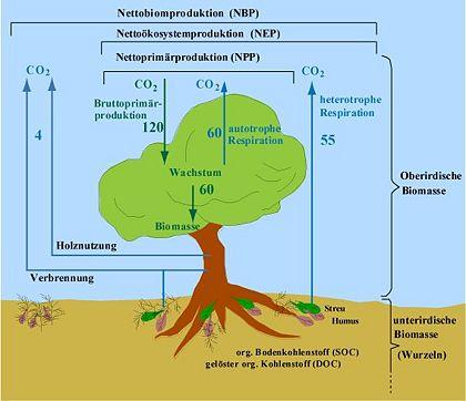 Biosph re im klimasystem klimawandel for Definition von boden