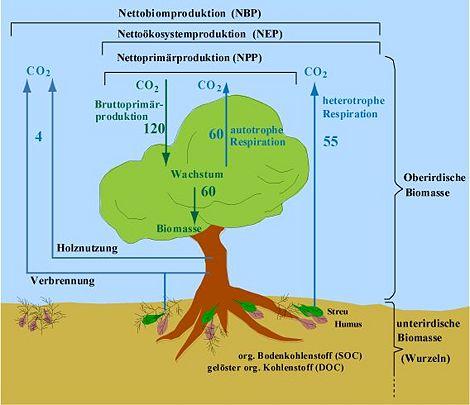 Terrestrischer Kohlenstoffkreislauf – Klimawandel