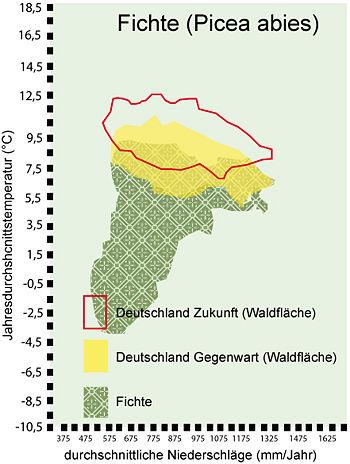 beziehung waldboden und klima