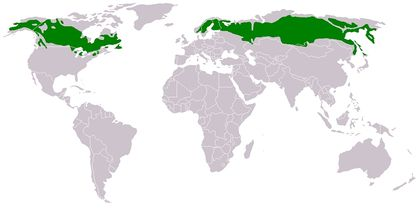 Waldbrände Alaska Karte.Waldbrände In Hohen Breiten Klimawandel