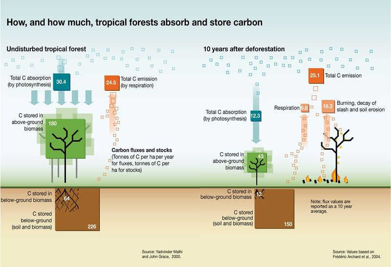 Datei:Tropical forests C storage.jpg