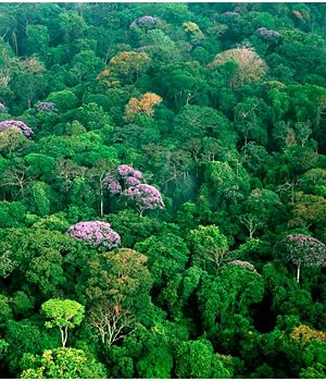 Tropischer regenwald auf barro colorado island panama