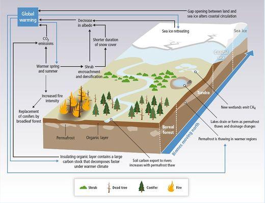 Arktische Vegetation – Klimawandel